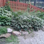Hosta Bed - Before